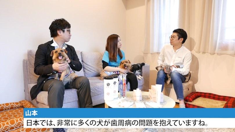 ゲスト対談:犬の口腔ケア|犬のベッド:アンベルソ