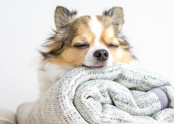 ブランケット:ケイリー|犬のベッド:アンベルソ