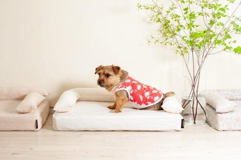 クッション付きベッドカバー:オーガニックサマーフィール|犬のベッド:アンベルソ