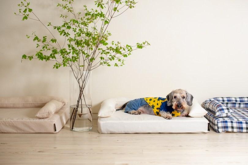 クッション付きベッドカバー:オーガニックサマーフィール 犬のベッド:アンベルソ