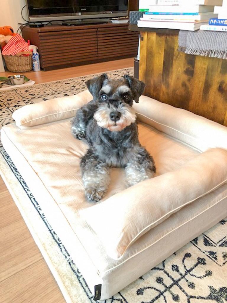 Mシュナウザーのジョリィちゃん10歳 犬のベッド:アンベルソ