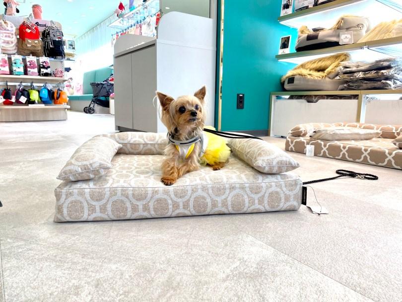 ロイヤルベッドお試し会 at 日本橋三越本店ジョーカー9月のイベント|犬のベッド:アンベルソ