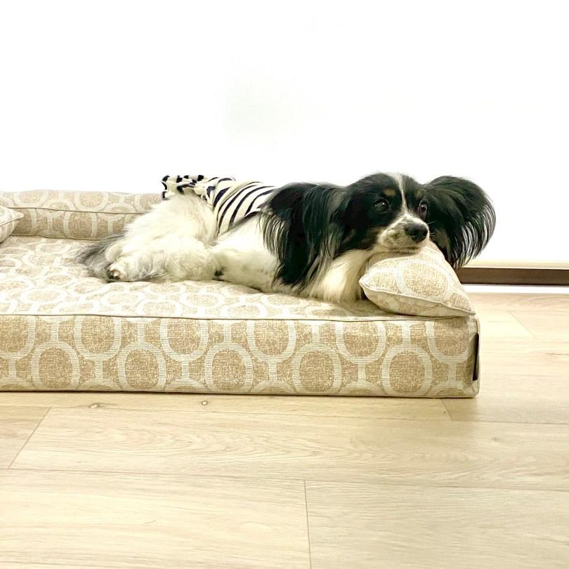 アンベルソ・ストア 犬のベッド:アンベルソ
