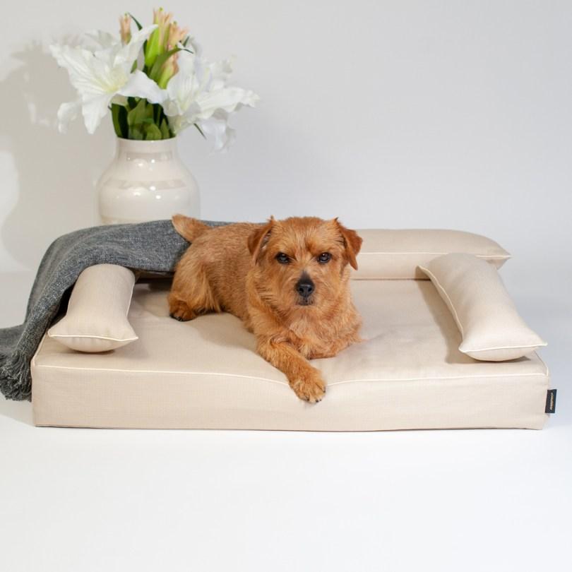 クッション付きベッドカバー:ファビア(グレージュ・プレイン) 犬のベッド:アンベルソ
