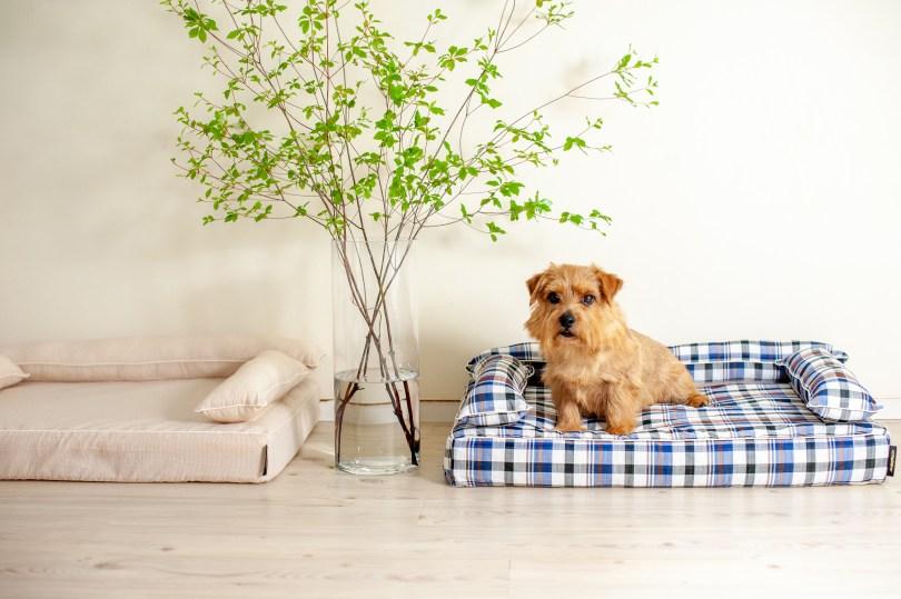 あご乗せクッション付きカバー:ジュリオ 犬のベッド:アンベルソ