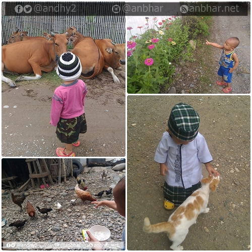 Menyapa hewan yang ada di sekitar rumah. Sapi yang dilewati ke pasar, kupu-kupu yang hinggap di bunga, memberi makan ayam dan menyapa kucing tetangga :D