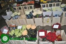 piata de flori Szeged