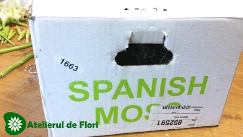 muschi spaniol