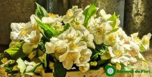 floarea de iasomie