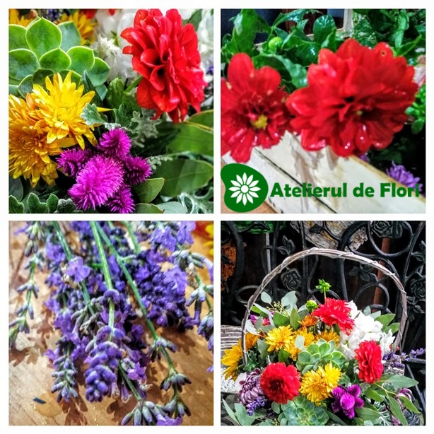 Flori de sezon toamna