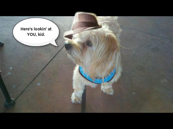 Bogie the dog