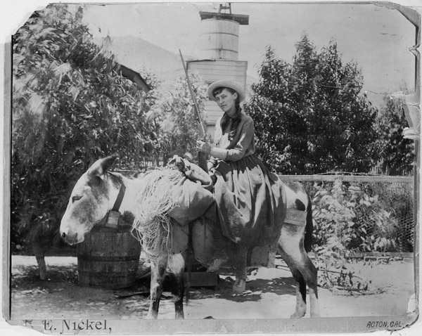 Lou Henry on a burro at Acton, CA on 22 August 1891 (Wikipedia)