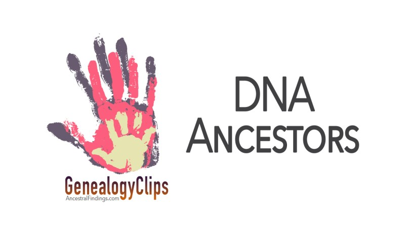 Y-DNA and mt-DNA, and How They Can Help You Trace Your Ancestors