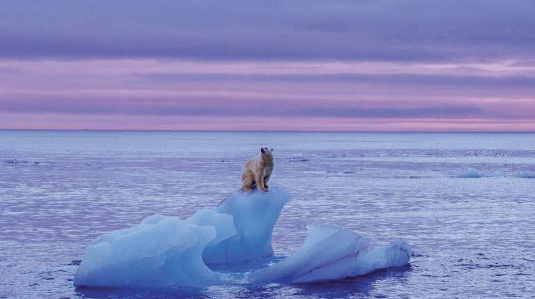 polar-bear-global