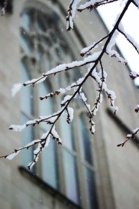 snow_hope-10