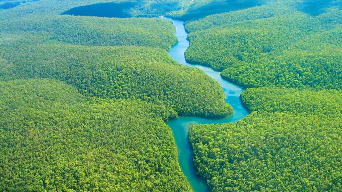 amazon-rainforest-hero