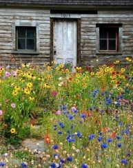 Beautiful Flower Garden for Your Front Yard 31
