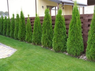 Amazing Privacy Fence Ideas to Perfect Your Backyard 30