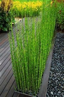 Amazingly Creative Long Planter Ideas for Your Patio 52