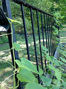 Cool DIY Garden Trellis Ideas 13
