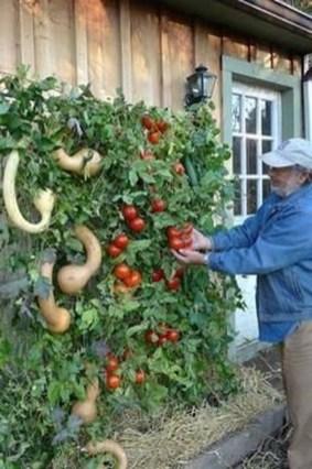 Basic Exterior Wall Into an Elegant Vertical Garden to Perfect Your Garden 17
