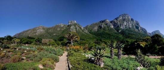 102 years on the making: Kirstenbosch Botanical Gardens. Photo Courtesy of: Cape Town Tourism