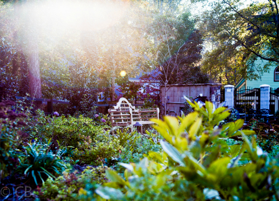 Garden TLC: How to add some privacy to your yard