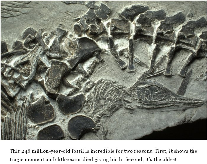 What Really Killed the Dinosaurs & When?