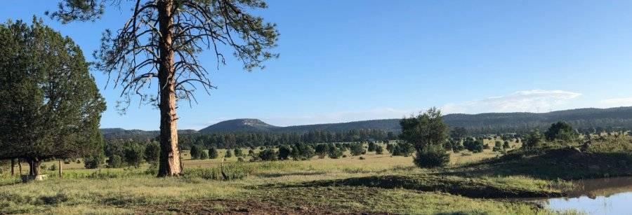 The beauty of Q Ranch in summer, site of our Arizona pottery workshop