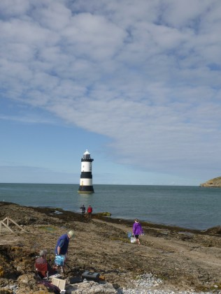 Where we spotted seals at Penmon