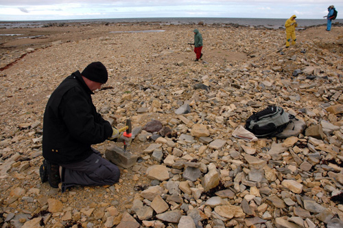 Norman Aime splits rock at the Churchill site.  In the background, both Ed Dobrzanski and Pete Fenton are carrying shotguns for protection against polar bears. (photo © David Rudkin, Royal Ontario Museum)