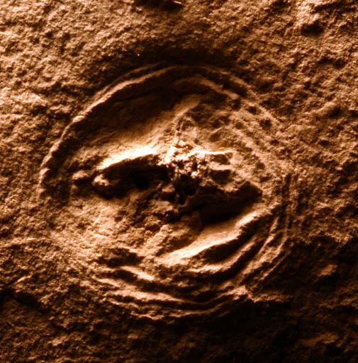 Ordovician fossil jellyfish from central Manitoba (The Manitoba Museum, specimen I-    )