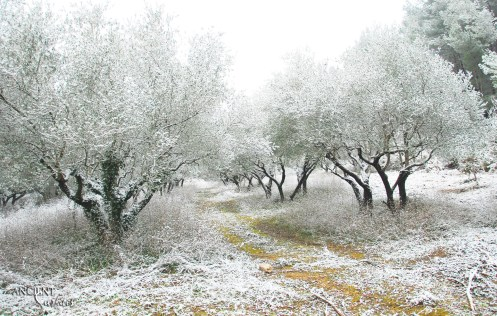 snowy-provence-nature-trees-