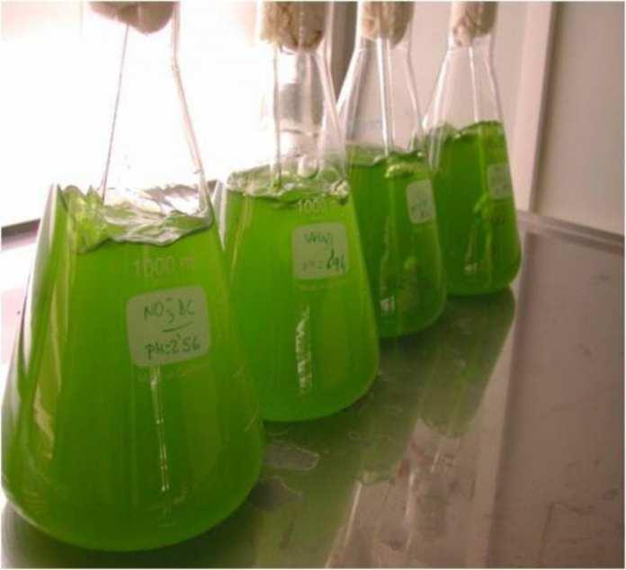 Depuración aguas residuales