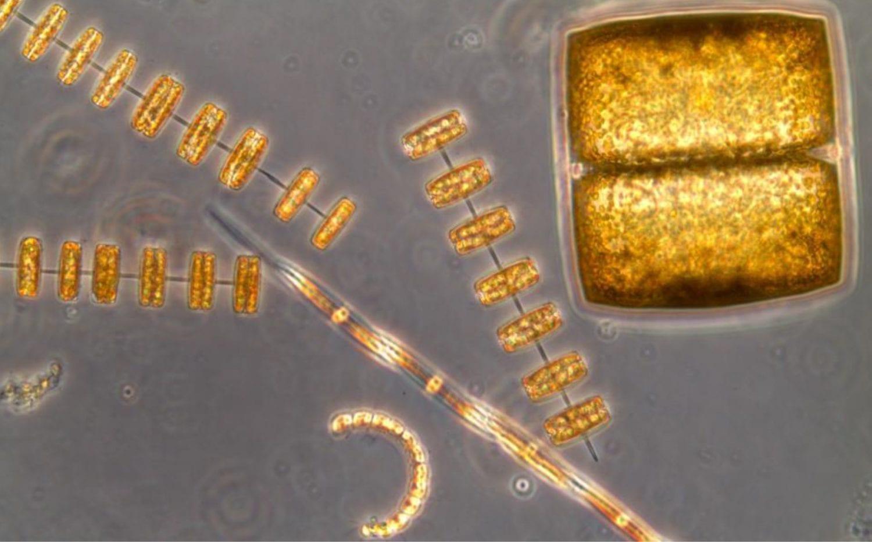 Fotosintesis marina