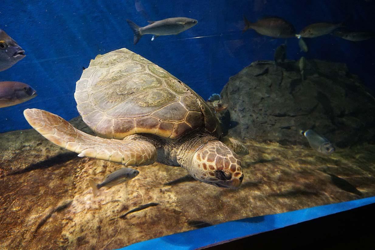 tortuga acuario de Sevilla