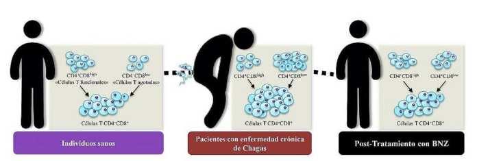 Enfermedad de Chagas