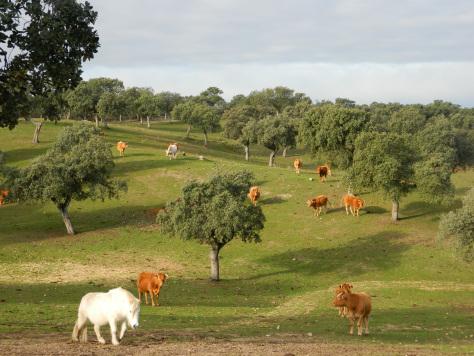 pedroches_cordoba_andalusia_consigli_vacanze_tour_guida_viaggio