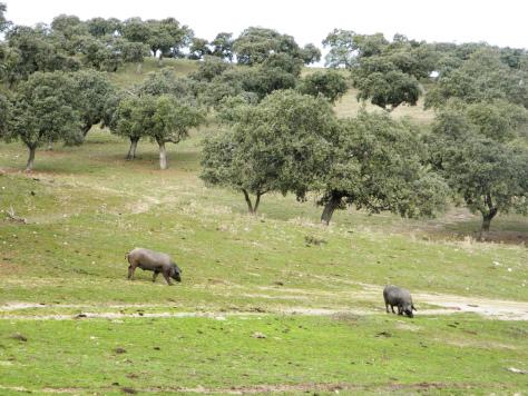 pedroches_cordoba_andalusia_consigli_vacanze_tour_guida_viaggio_rurale