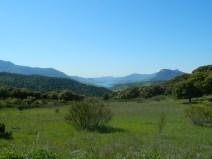 alcornocales_cadice_andalusia_andalucia_cosa-vedere_consigli_tour