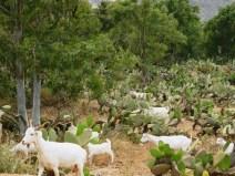 Cosa vedere nel Parco Cabo de Gata - Níjar - fauna