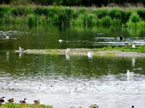 Cosa vedere a Fuente de Piedra - avifauna
