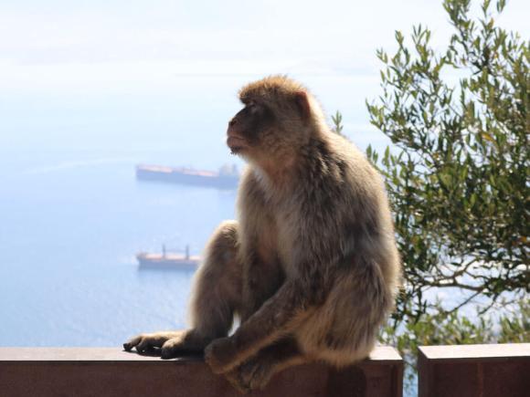 cosa_vedere_gibilterra_scimmie