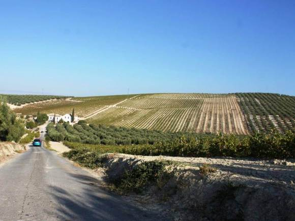 montilla_vino_cantine_cañada_navarro