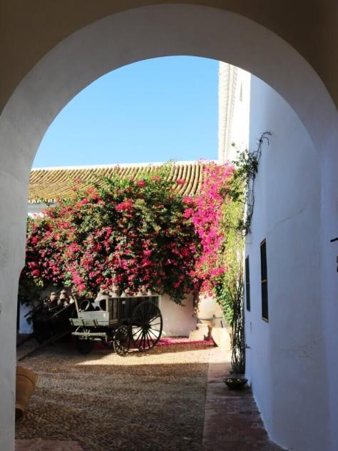 olio_turismo_siviglia_hacienda_fiori