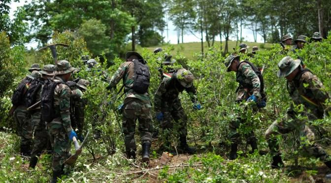 Senadora señala que nadie se anima a investigar la presencia de cárteles en Bolivia