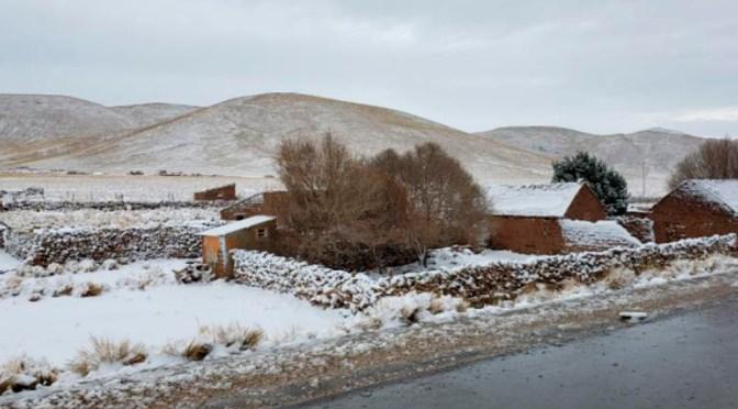 Última nevada provocó la muerte de ganado en Yunchará