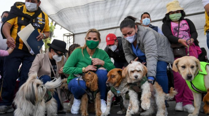 Áñez pone en vigencia Ley 700 de protección a los animales