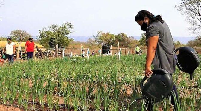 Implementan más de 40 huertos hortícolas en el área urbana de Yacuiba