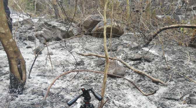 Controlan el incendio en el Aguaragüe en Yacuiba